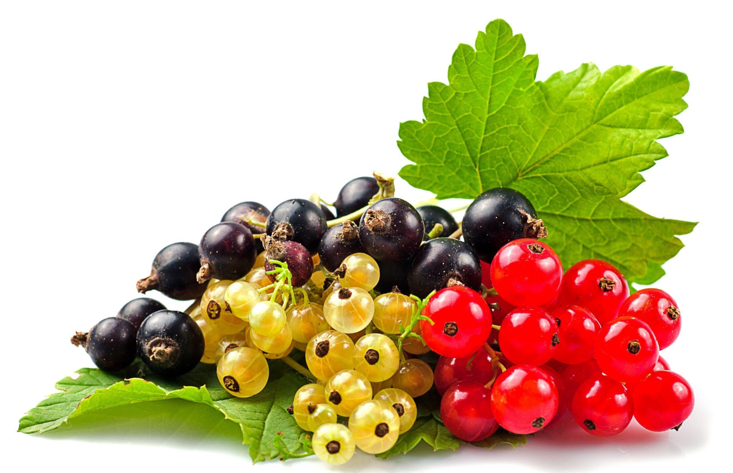 Qara və qırmızı qarağatın bu faydalarını bilirdiniz?